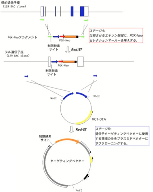 KO_図1
