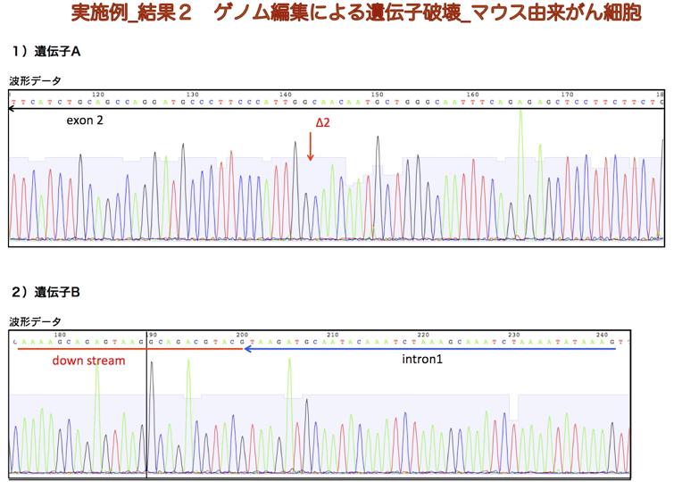 実施例_結果2 ゲノム編集による遺伝子破壊_マウス由来がん細胞